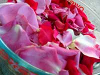 Rose water starts with fresh roses...