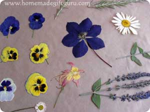 Dried Pressed Flowers Instructions And Gift Ideas