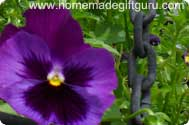 Pansies are both edible and extremely beautiful when pressed for flower crafts...
